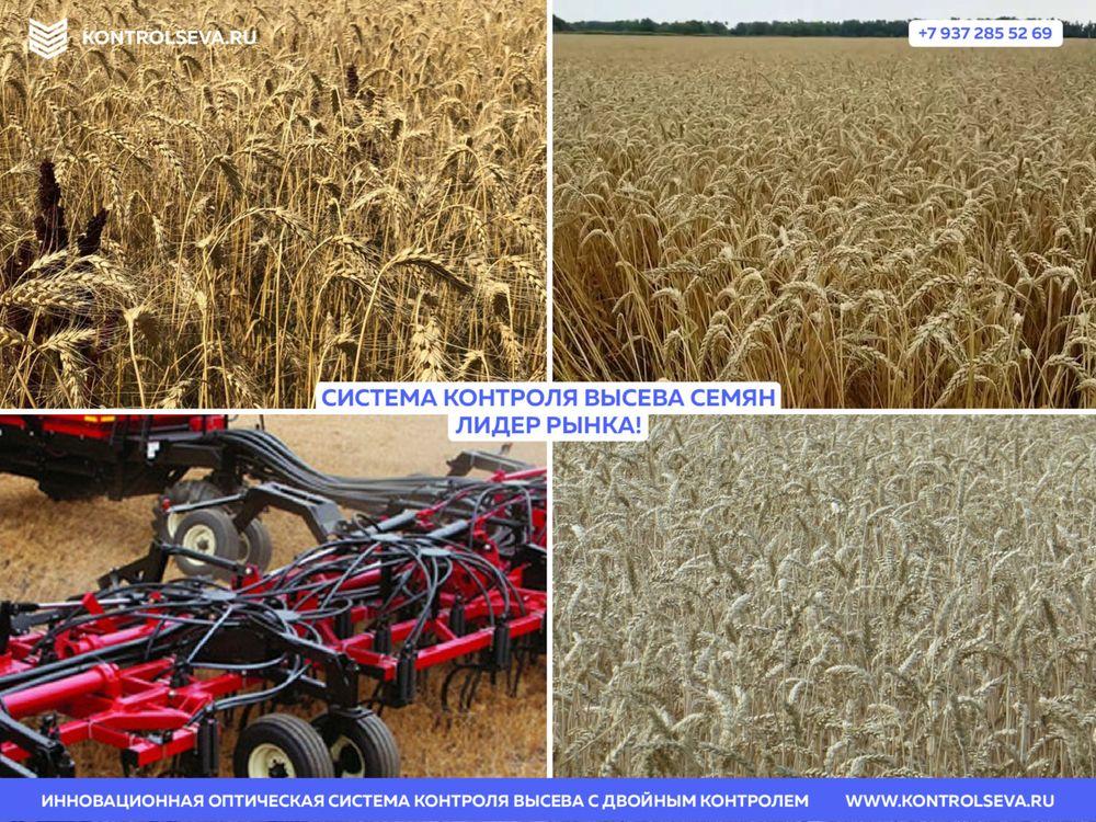 Сеялка зерновая Омичка продам дешево