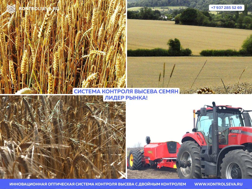 Сохранение стерни пшеницы